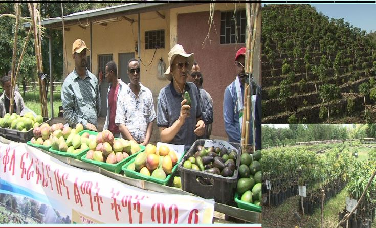 Chief of the Amhara Regional State, Temesgen Tiruneh on his part said the Argoba Nation is a great example of developing a mountain and living in love with other nations.